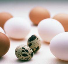 Какие яйца самые полезные для потенции и как их применять?