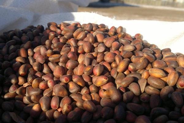 потенция арахис