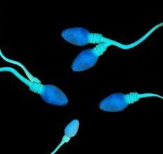 Некроспермия – что это за болезнь и как ее лечить мужчине?