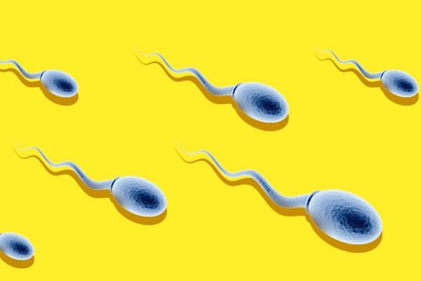 В спермограмме единичные сперматозоиды присоединяюсь