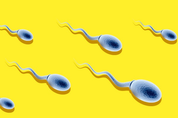 Мужские сперматозоиды