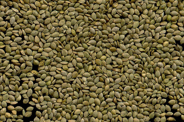 Семена крапивы для потенции 23