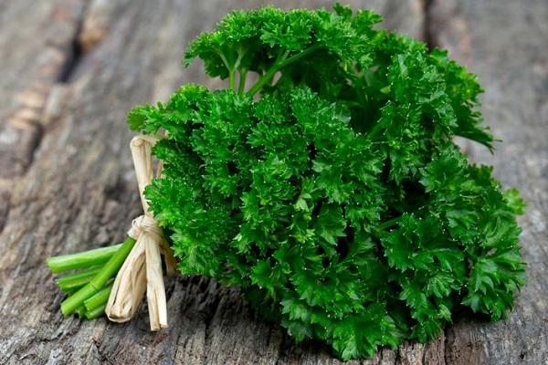 Петрушка - растение для повышения потенции у мужчин
