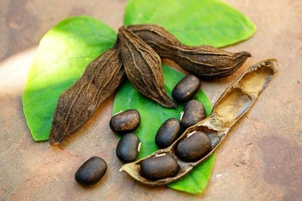 Растение Жгучая Мукуна