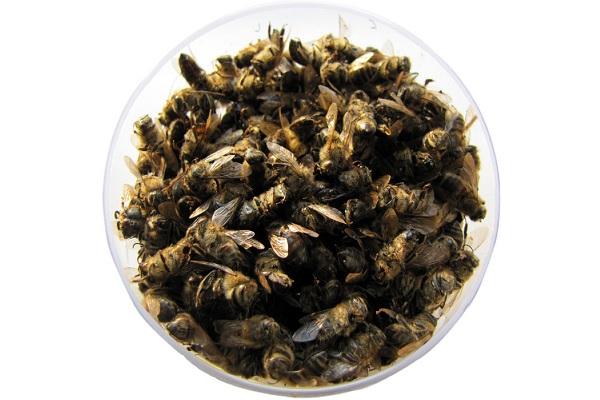 Как выглядит пчелиный подмор?