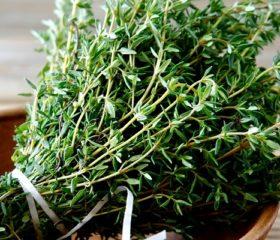 Чабрец – полезные свойства и противопоказания для мужчин, рецепты