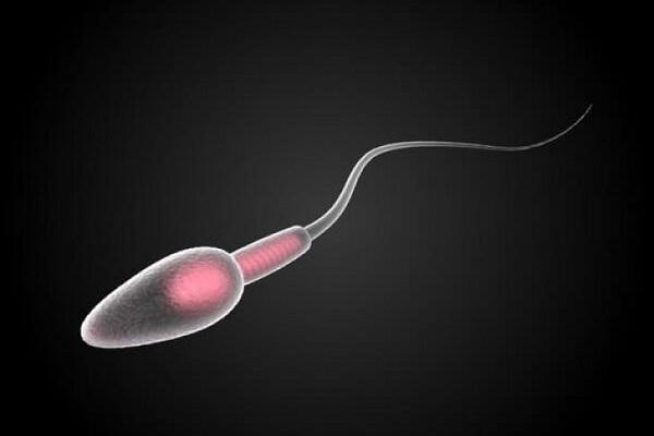 Мужской сперматозоид