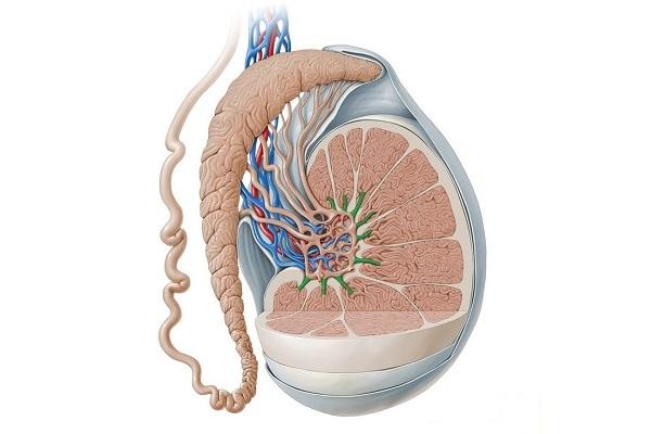 Как выглядит орхоэпидидимит у мужчин