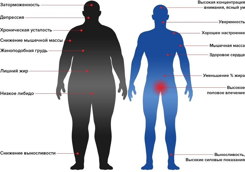 Низкий и нормальный уровень тестостерона