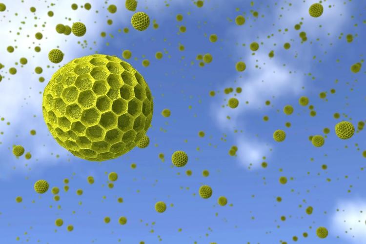 Как выглядят аллергены