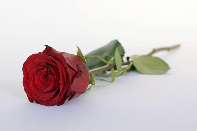 1 роза